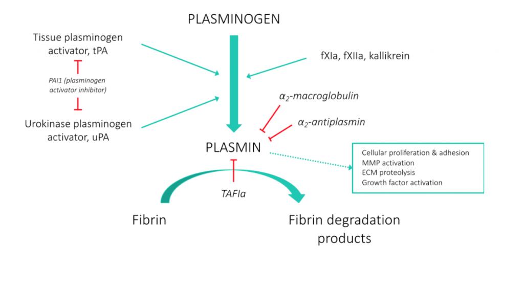 define plasminogen activators